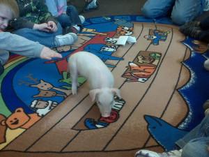 piglet-preschool